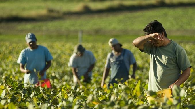 keres egy farmer férfi)