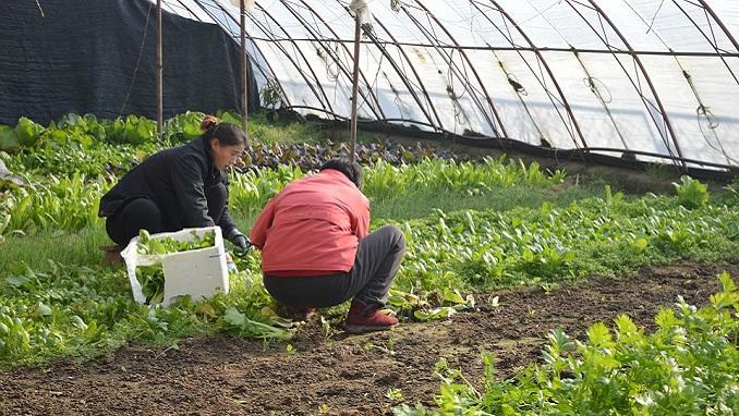 iFarm Raises $1mn for Urban Farming Project - Russia