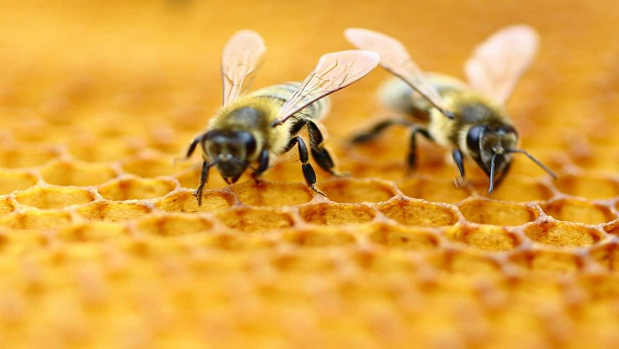 Pesticide Causes Mass Death Of Bees In Russia